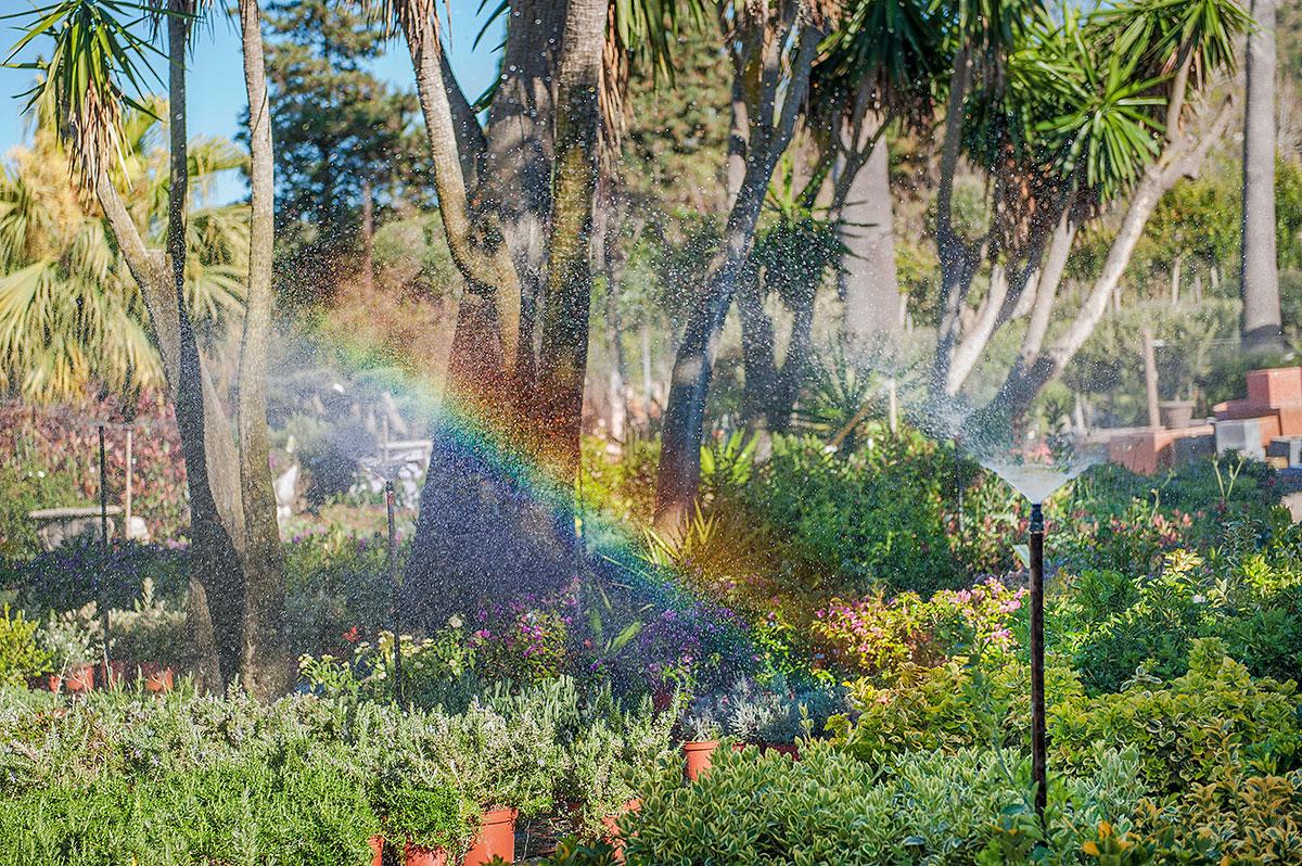 Jardineria bisanyes centro de jardineria en alcudia for Mantenimiento de jardines